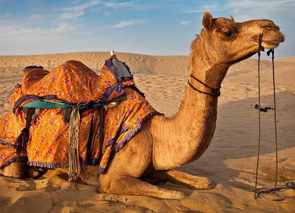 rajasthan tour package by chardham tourism