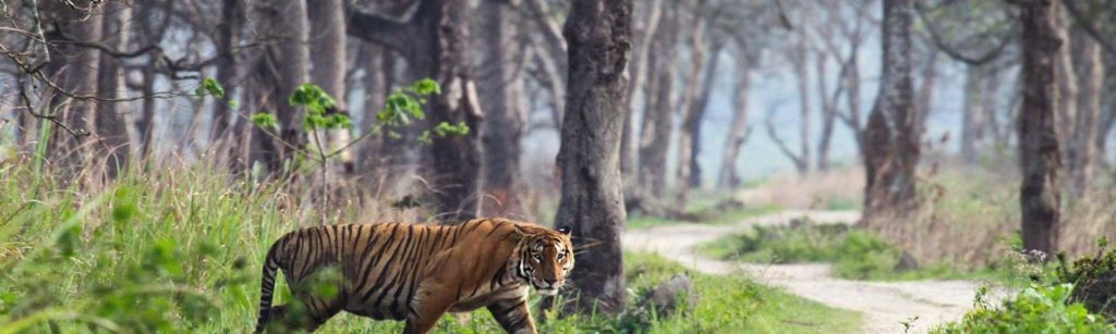 Ranthambore - Tourism Spot in India